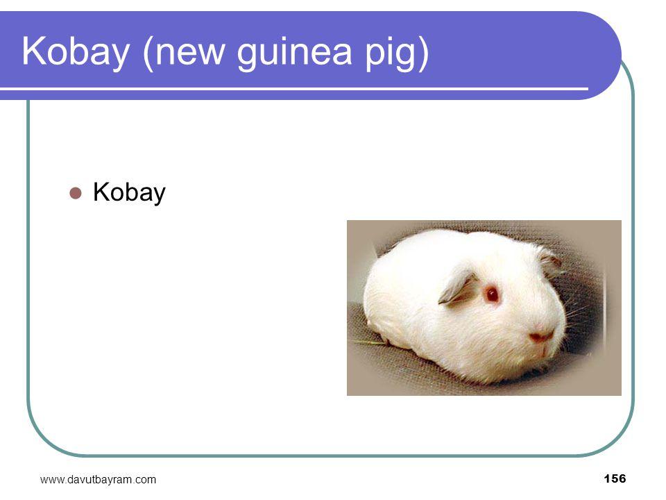 www.davutbayram.com 156 Kobay (new guinea pig) Kobay
