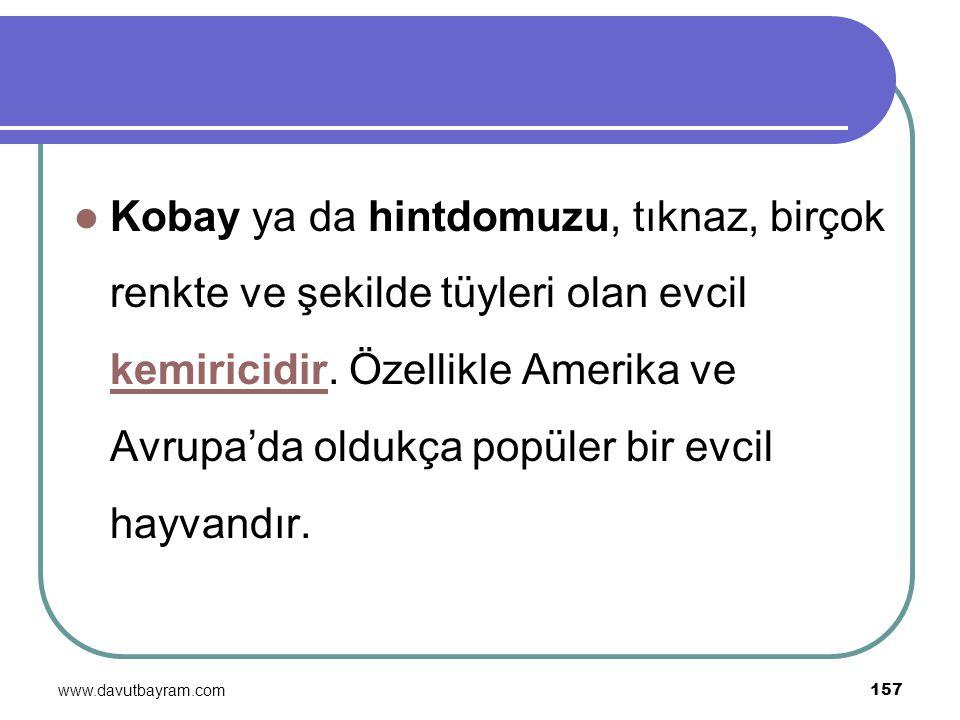 www.davutbayram.com 157 Kobay ya da hintdomuzu, tıknaz, birçok renkte ve şekilde tüyleri olan evcil kemiricidir. Özellikle Amerika ve Avrupa'da oldukç