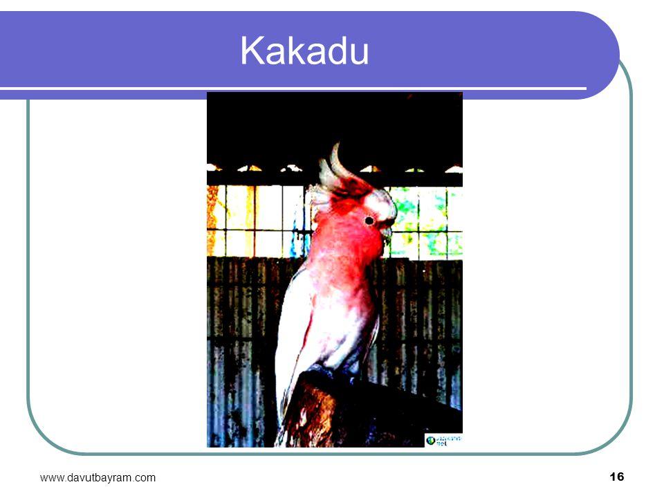 www.davutbayram.com 16 Kakadu