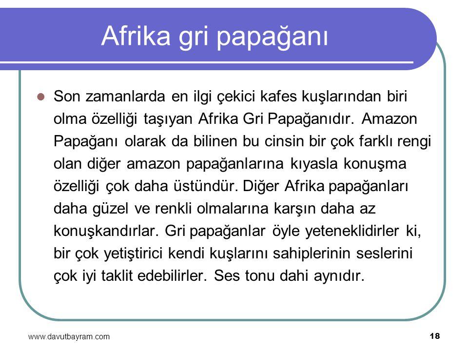 www.davutbayram.com 18 Afrika gri papağanı Son zamanlarda en ilgi çekici kafes kuşlarından biri olma özelliği taşıyan Afrika Gri Papağanıdır. Amazon P