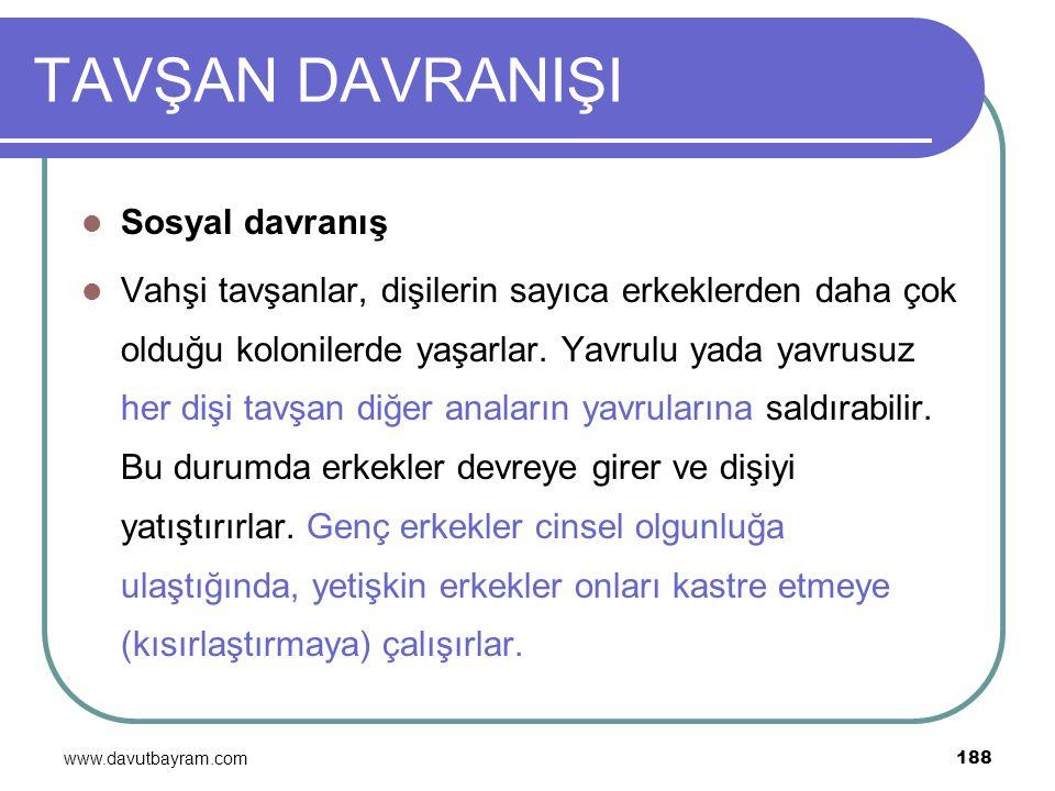 www.davutbayram.com 188 TAVŞAN DAVRANIŞI Sosyal davranış Vahşi tavşanlar, dişilerin sayıca erkeklerden daha çok olduğu kolonilerde yaşarlar. Yavrulu y