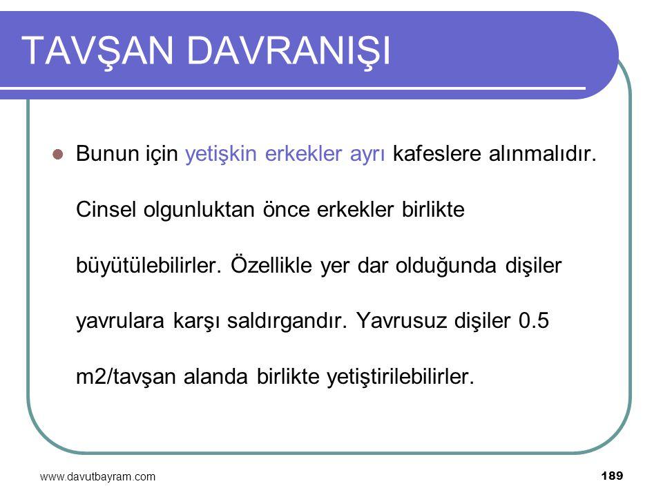 www.davutbayram.com 189 TAVŞAN DAVRANIŞI Bunun için yetişkin erkekler ayrı kafeslere alınmalıdır. Cinsel olgunluktan önce erkekler birlikte büyütülebi