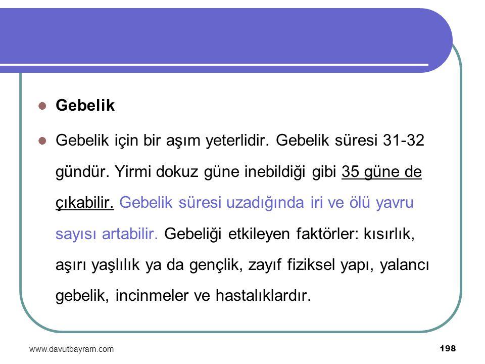 www.davutbayram.com 198 Gebelik Gebelik için bir aşım yeterlidir. Gebelik süresi 31-32 gündür. Yirmi dokuz güne inebildiği gibi 35 güne de çıkabilir.