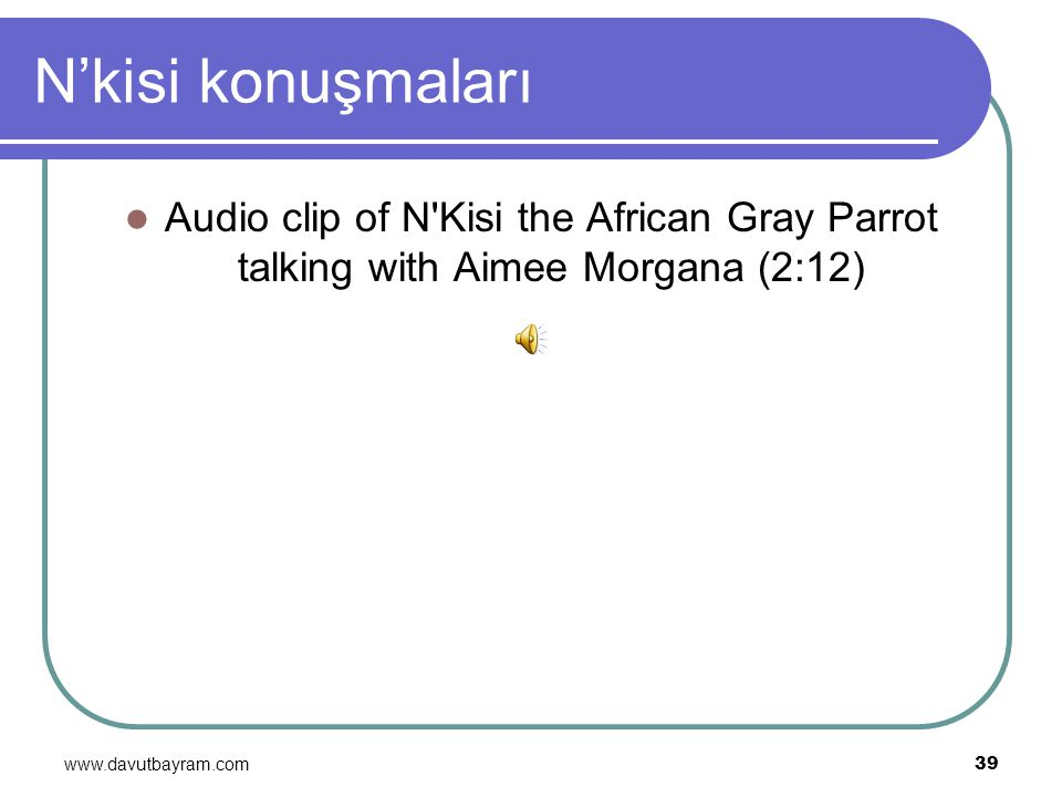 www.davutbayram.com 39 N'kisi konuşmaları Audio clip of N'Kisi the African Gray Parrot talking with Aimee Morgana (2:12)