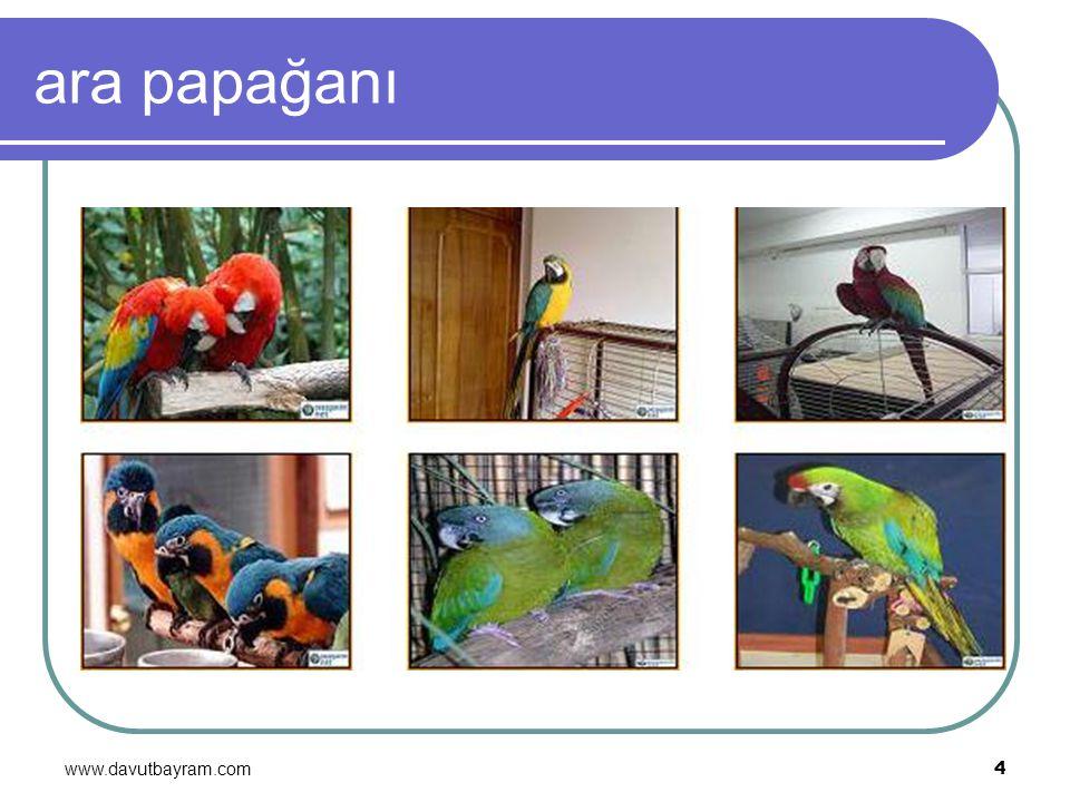 www.davutbayram.com 4 ara papağanı