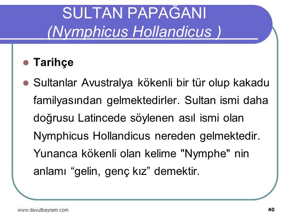 www.davutbayram.com 40 SULTAN PAPAĞANI (Nymphicus Hollandicus ) Tarihçe Sultanlar Avustralya kökenli bir tür olup kakadu familyasından gelmektedirler.