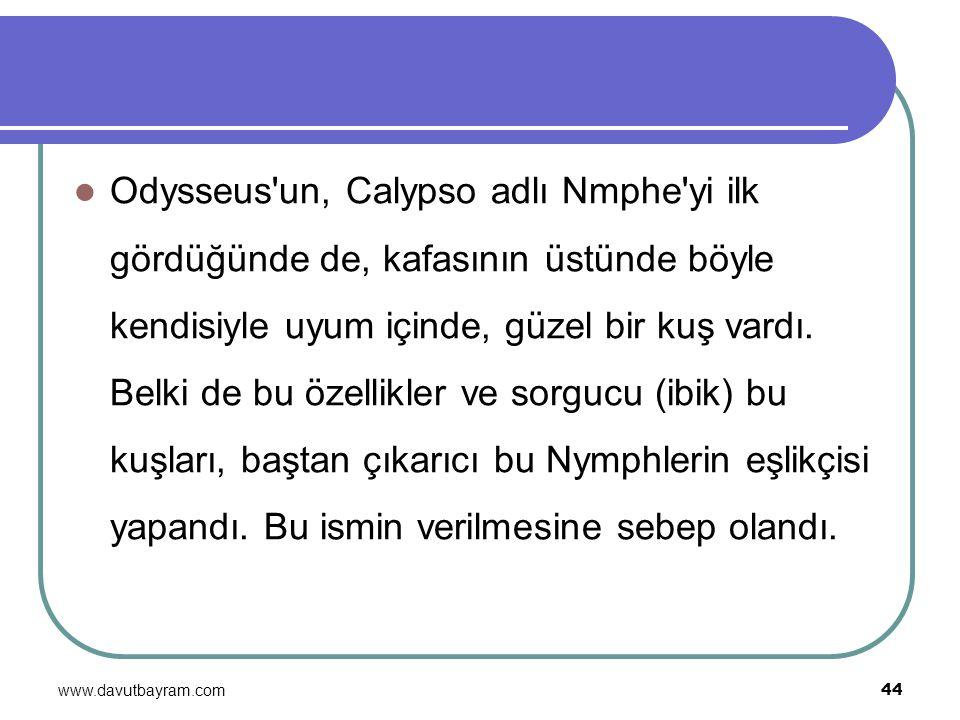 www.davutbayram.com 44 Odysseus'un, Calypso adlı Nmphe'yi ilk gördüğünde de, kafasının üstünde böyle kendisiyle uyum içinde, güzel bir kuş vardı. Belk