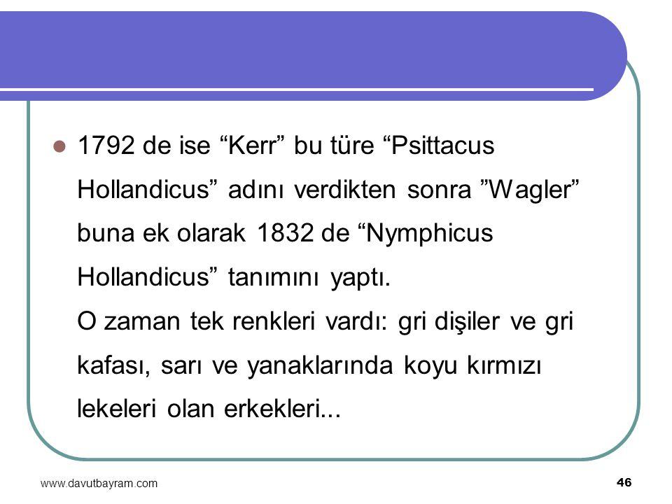 """www.davutbayram.com 46 1792 de ise """"Kerr"""" bu türe """"Psittacus Hollandicus"""" adını verdikten sonra """"Wagler"""" buna ek olarak 1832 de """"Nymphicus Hollandicus"""