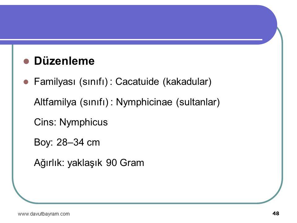 www.davutbayram.com 48 Düzenleme Familyası (sınıfı) : Cacatuide (kakadular) Altfamilya (sınıfı) : Nymphicinae (sultanlar) Cins: Nymphicus Boy: 28–34 c