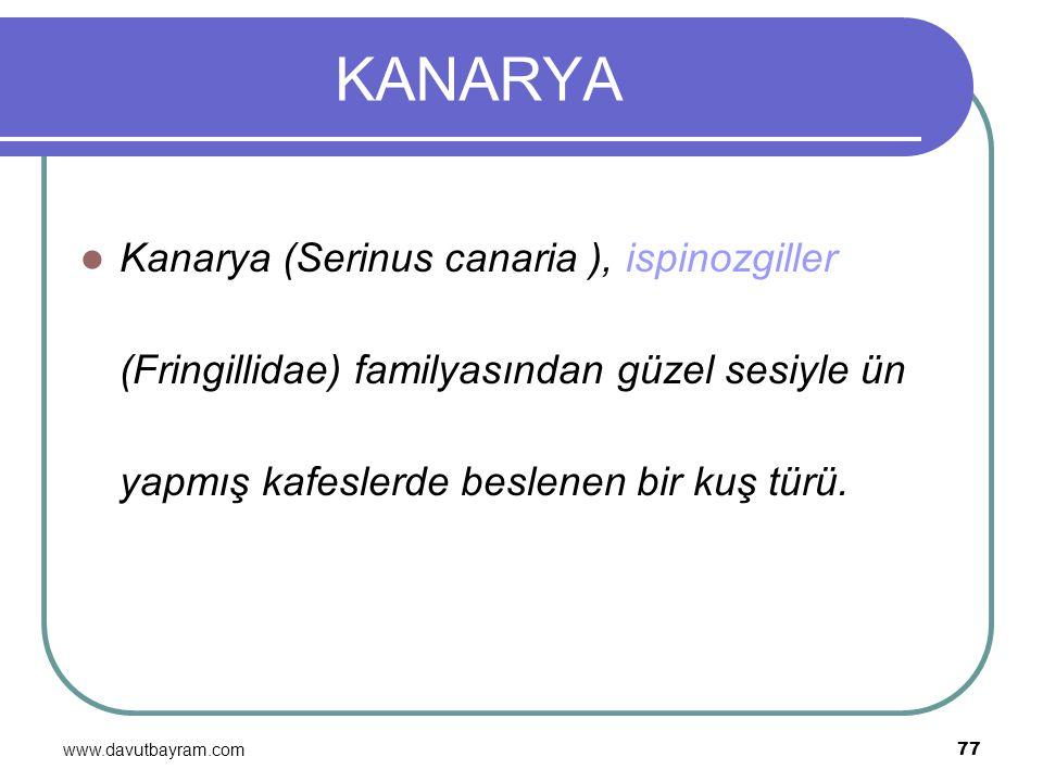 www.davutbayram.com 77 KANARYA Kanarya (Serinus canaria ), ispinozgiller (Fringillidae) familyasından güzel sesiyle ün yapmış kafeslerde beslenen bir