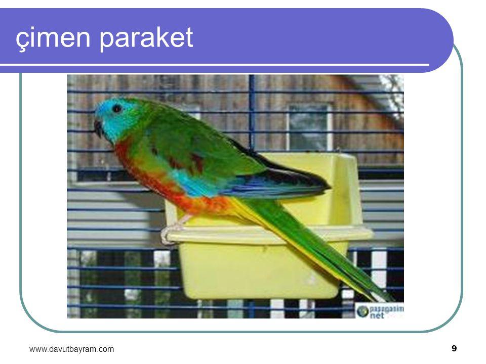 www.davutbayram.com 9 çimen paraket