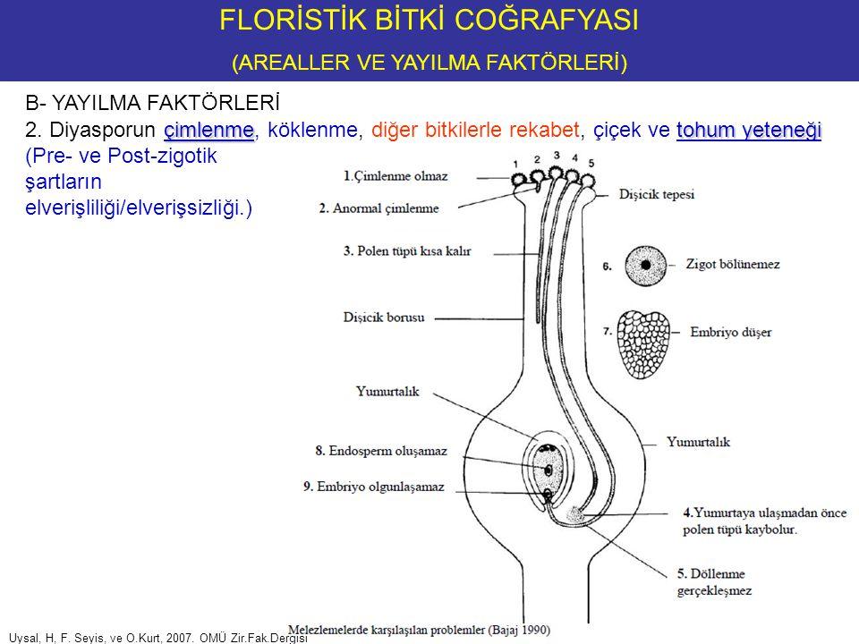 FLORİSTİK BİTKİ COĞRAFYASI (AREAL TİPLERİ) 1.KOZMOPOLİTLER Örnek Familyalar: Örnek Cinsler: Örnek Türler: Ranunculaceae, Scrophulariaceae, Asteraceae, Liliaceae ve Poaceae Polypodium, Drosera Bryophytadan Marchantia polymorpha, Bryum argenteum, Tanımı, Tür, cins, familya veya üst düzeyde temsilleri Su ve bataklık bitkilerinden Phragmites australis (Sazkamışı, Amazon hariçi) Lemna minor, Typha latifolia (Kofa, Orta ve G.Afrika hariç) Ruderal bitkilerden Lactuca serriola, L.