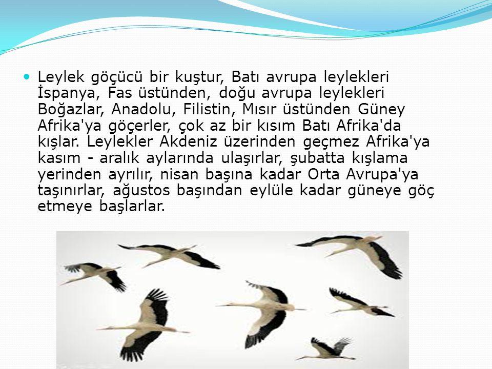 Leylek göçücü bir kuştur, Batı avrupa leylekleri İspanya, Fas üstünden, doğu avrupa leylekleri Boğazlar, Anadolu, Filistin, Mısır üstünden Güney Afrik