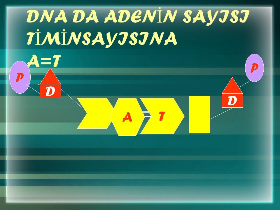 DNA DA ADEN İ N SAYISI T İ M İ NSAYISINA A=T P A T D P D