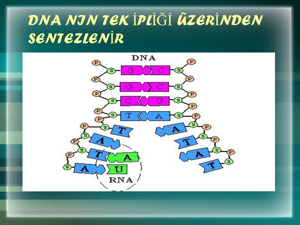 DNA NIN TEK İ PL İĞİ ÜZER İ NDEN SENTEZLEN İ R