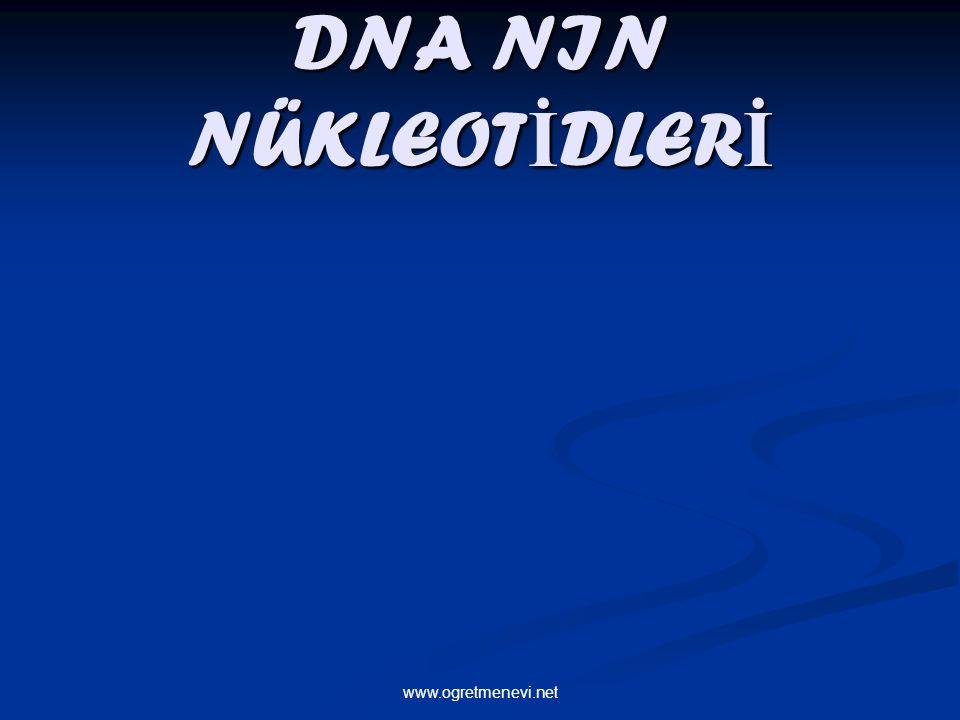 www.ogretmenevi.net DNA NIN NÜKLEOT İ DLER İ