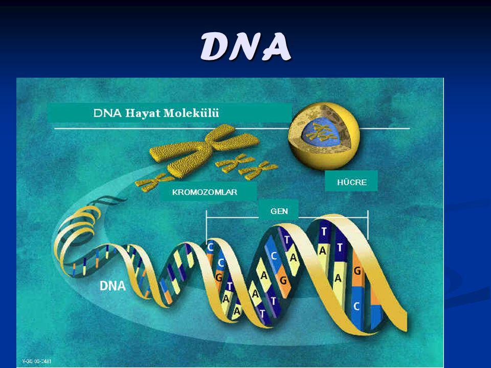 www.ogretmenevi.net DNA