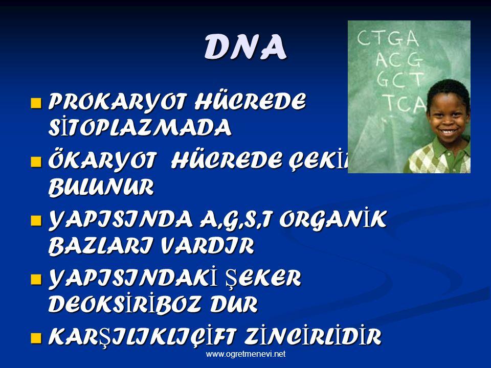 DNA PROKARYOT HÜCREDE S İ TOPLAZMADA PROKARYOT HÜCREDE S İ TOPLAZMADA ÖKARYOT HÜCREDE ÇEK İ RDEKTE BULUNUR ÖKARYOT HÜCREDE ÇEK İ RDEKTE BULUNUR YAPISINDA A,G,S,T ORGAN İ K BAZLARI VARDIR YAPISINDA A,G,S,T ORGAN İ K BAZLARI VARDIR YAPISINDAK İ Ş EKER DEOKS İ R İ BOZ DUR YAPISINDAK İ Ş EKER DEOKS İ R İ BOZ DUR KAR Ş ILIKLIÇ İ FT Z İ NC İ RL İ D İ R KAR Ş ILIKLIÇ İ FT Z İ NC İ RL İ D İ R