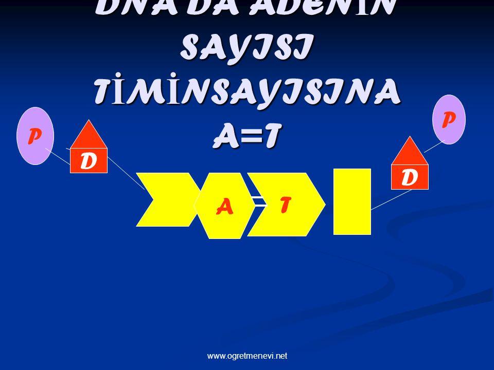 www.ogretmenevi.net DNA DA ADEN İ N SAYISI T İ M İ NSAYISINA A=T P A T D P D
