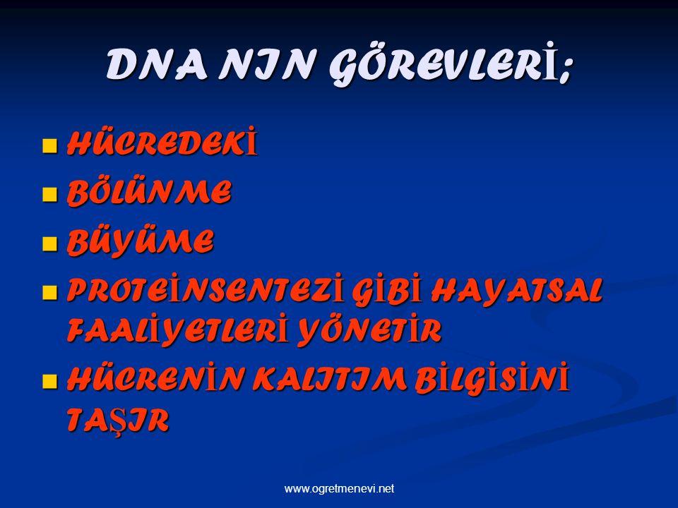 www.ogretmenevi.net DNA NIN GÖREVLER İ ; HÜCREDEK İ HÜCREDEK İ BÖLÜNME BÖLÜNME BÜYÜME BÜYÜME PROTE İ NSENTEZ İ G İ B İ HAYATSAL FAAL İ YETLER İ YÖNET
