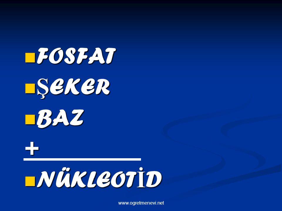 www.ogretmenevi.net FOSFAT FOSFAT Ş EKER Ş EKER BAZ BAZ+ NÜKLEOT İ D NÜKLEOT İ D