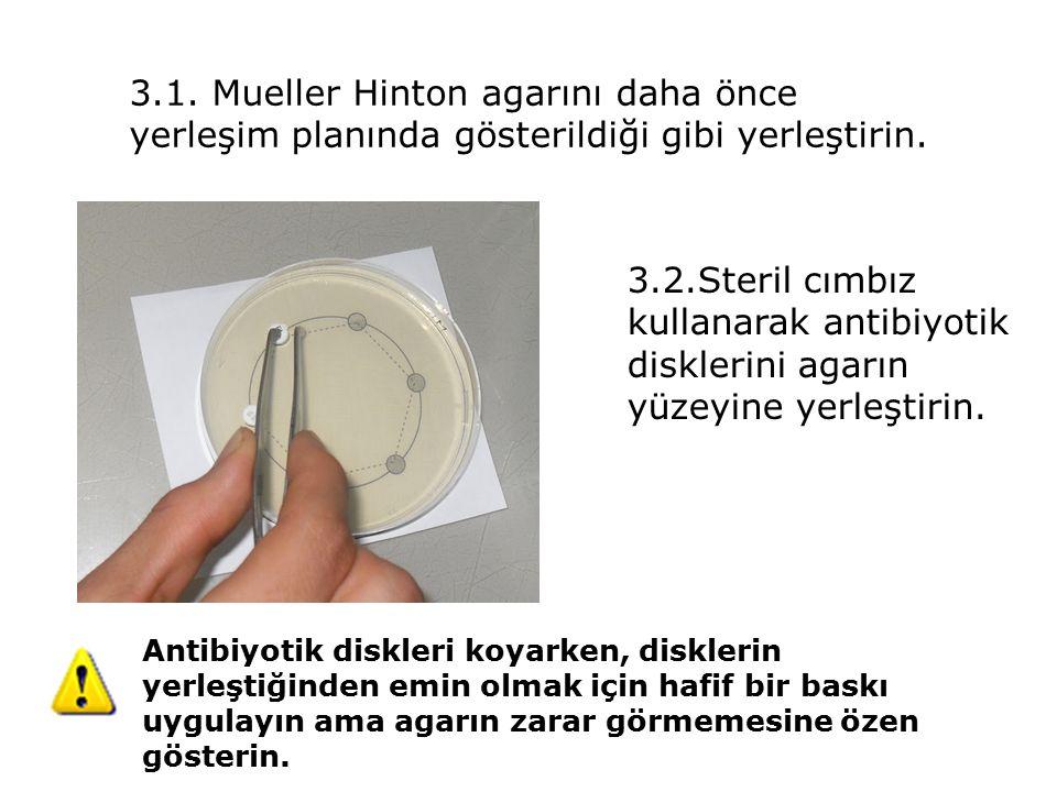 3.1. Mueller Hinton agarını daha önce yerleşim planında gösterildiği gibi yerleştirin. 3.2.Steril cımbız kullanarak antibiyotik disklerini agarın yüze