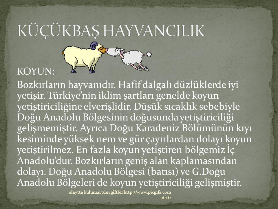 KOYUN: Bozkırların hayvanıdır. Hafif dalgalı düzlüklerde iyi yetişir. Türkiye'nin iklim şartları genelde koyun yetiştiriciliğine elverişlidir. Düşük s