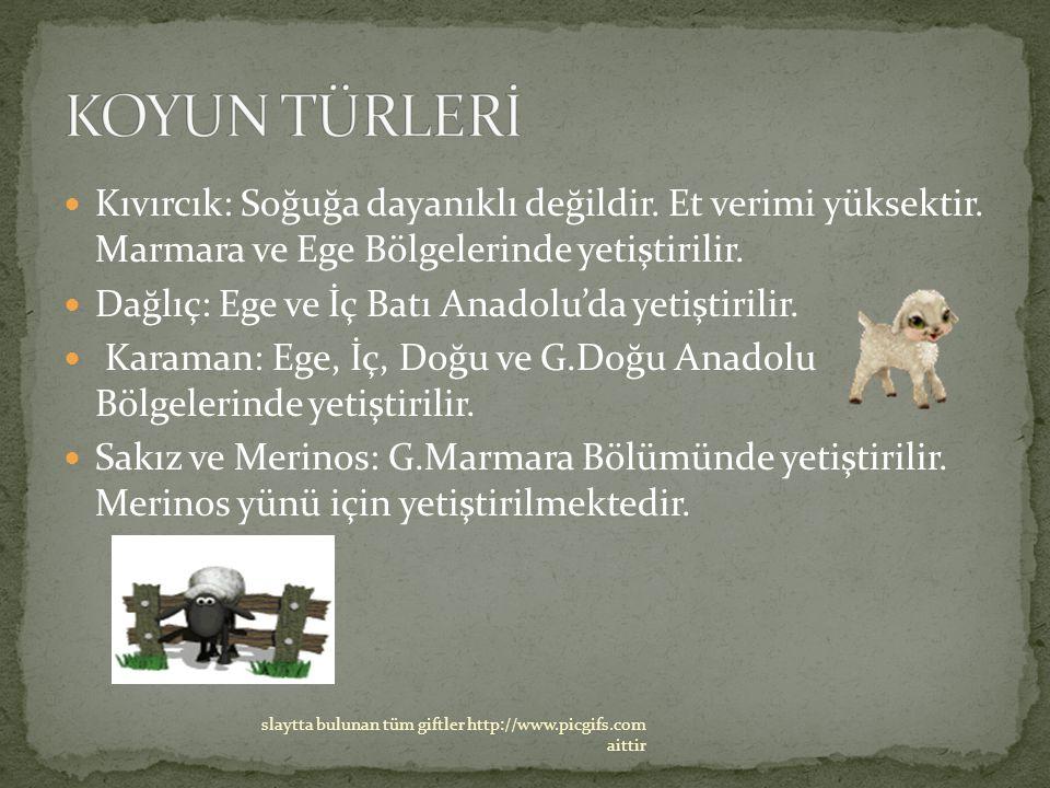Kıvırcık: Soğuğa dayanıklı değildir. Et verimi yüksektir. Marmara ve Ege Bölgelerinde yetiştirilir. Dağlıç: Ege ve İç Batı Anadolu'da yetiştirilir. Ka