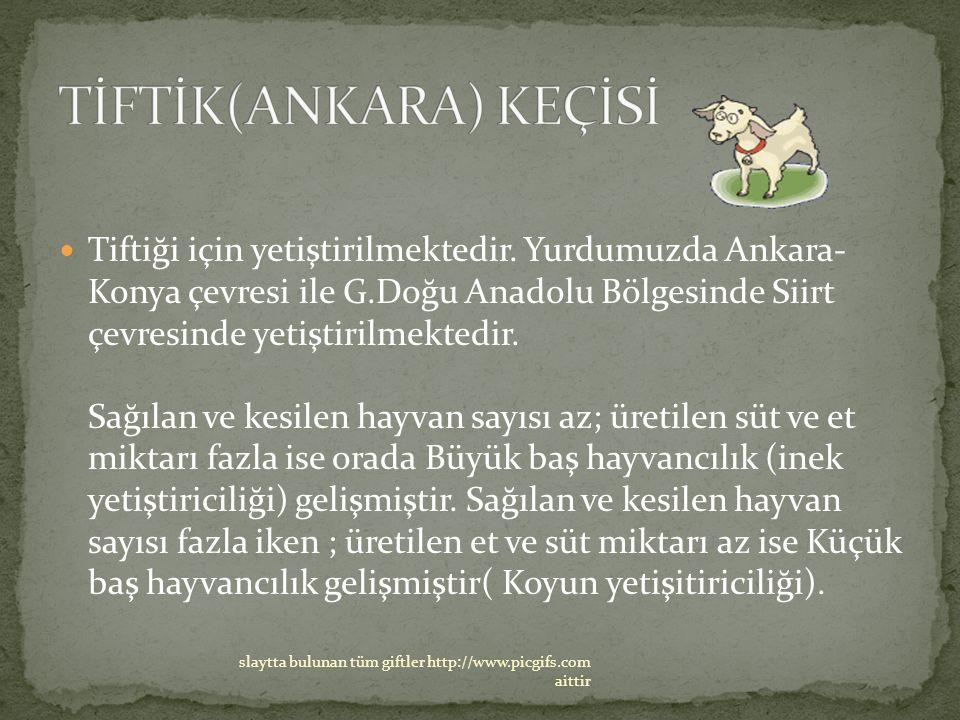 Tiftiği için yetiştirilmektedir. Yurdumuzda Ankara- Konya çevresi ile G.Doğu Anadolu Bölgesinde Siirt çevresinde yetiştirilmektedir. Sağılan ve kesile