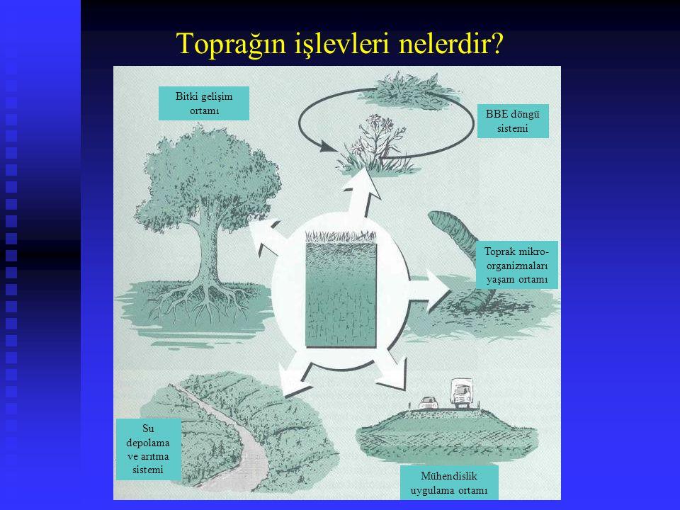 Toprağın işlevleri nelerdir? Bitki gelişim ortamı BBE döngü sistemi Su depolama ve arıtma sistemi Toprak mikro- organizmaları yaşam ortamı Mühendislik