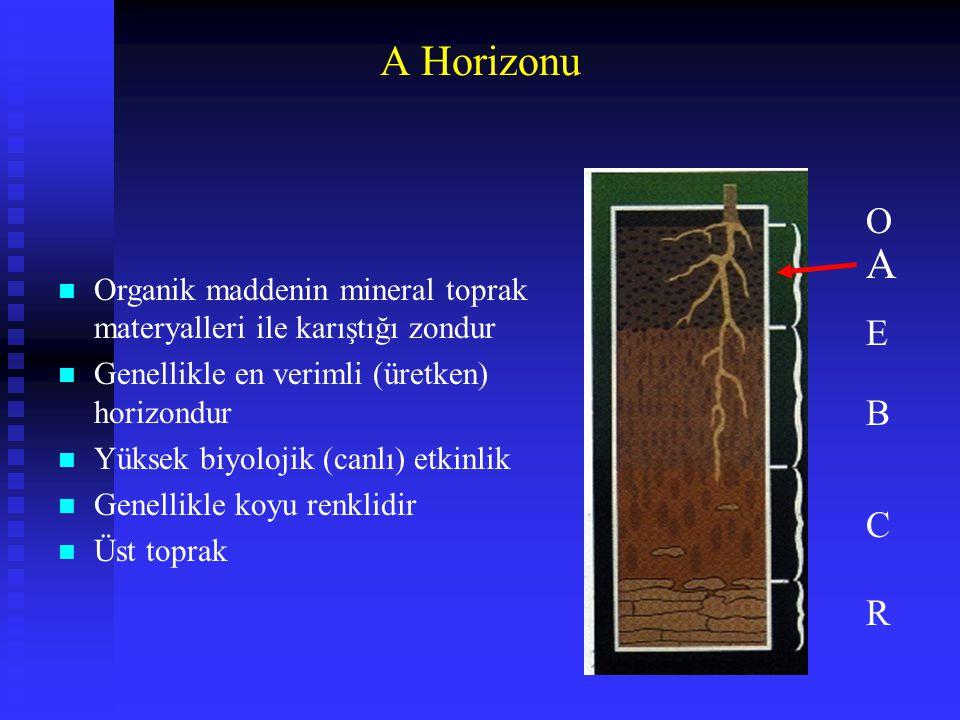 A Horizonu n Organik maddenin mineral toprak materyalleri ile karıştığı zondur n Genellikle en verimli (üretken) horizondur n Yüksek biyolojik (canlı)