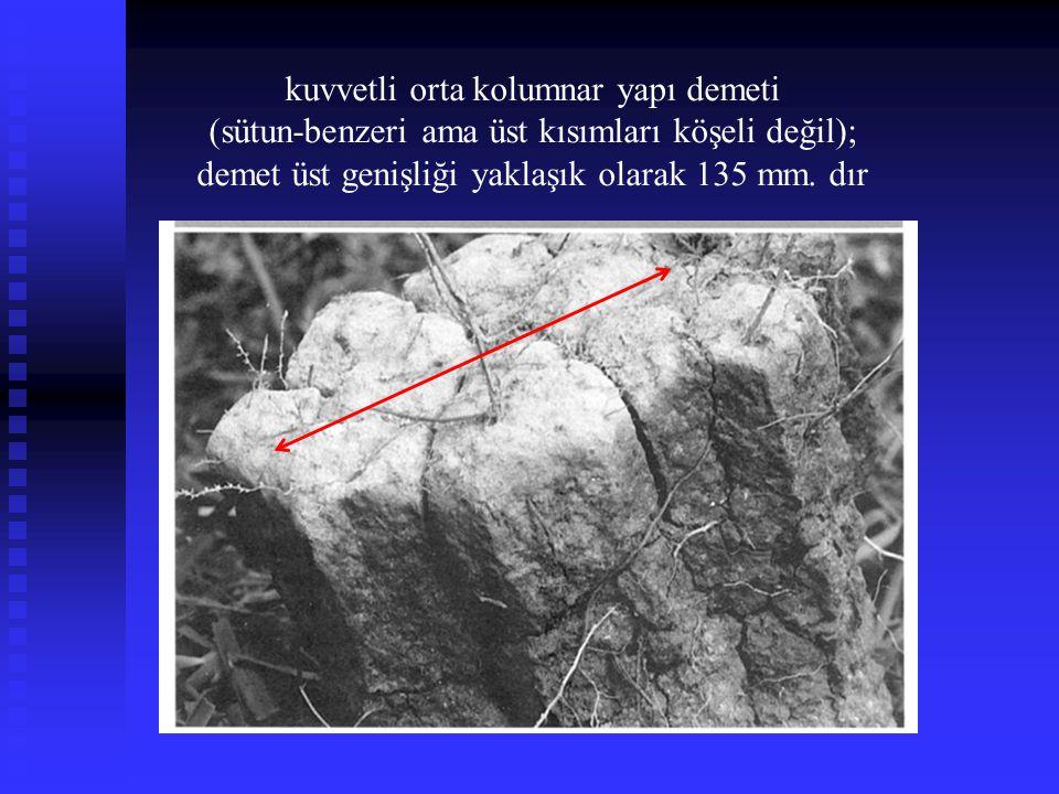kuvvetli orta kolumnar yapı demeti (sütun-benzeri ama üst kısımları köşeli değil); demet üst genişliği yaklaşık olarak 135 mm. dır