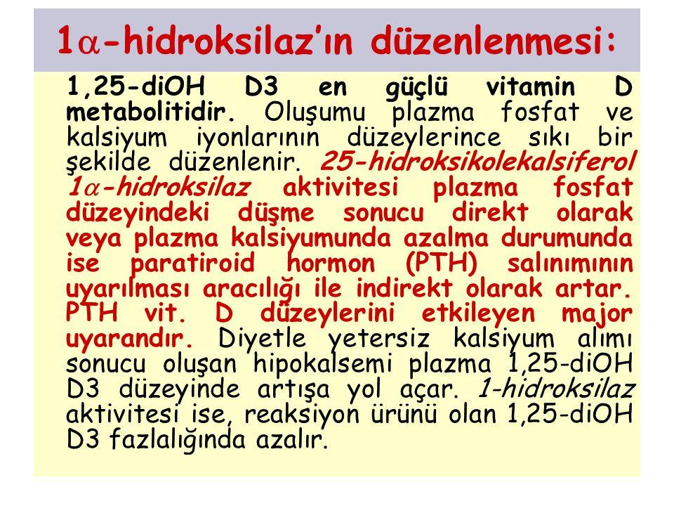1  -hidroksilaz'ın düzenlenmesi: 1,25-diOH D3 en güçlü vitamin D metabolitidir. Oluşumu plazma fosfat ve kalsiyum iyonlarının düzeylerince sıkı bir ş