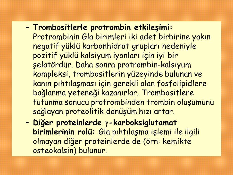 –Trombositlerle protrombin etkileşimi: Protrombinin Gla birimleri iki adet birbirine yakın negatif yüklü karbonhidrat grupları nedeniyle pozitif yüklü
