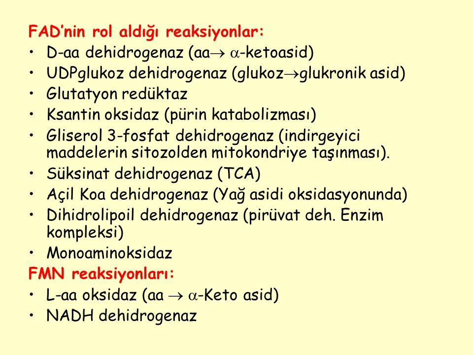 FAD'nin rol aldığı reaksiyonlar: D-aa dehidrogenaz (aa   -ketoasid) UDPglukoz dehidrogenaz (glukoz  glukronik asid) Glutatyon redüktaz Ksantin oksi