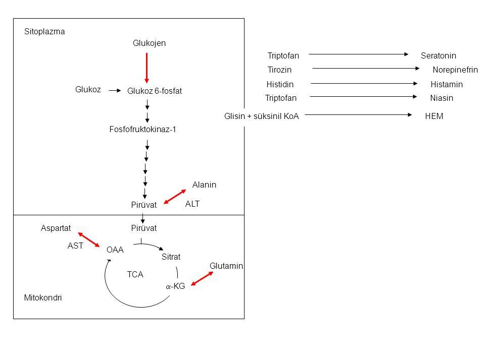 AST ALT Glutamin Glukoz 6-fosfat Pirüvat Fosfofruktokinaz-1 Glukoz TCA Sitrat Glukojen Sitoplazma Mitokondri Alanin  -KG OAA Aspartat TirozinNorepine