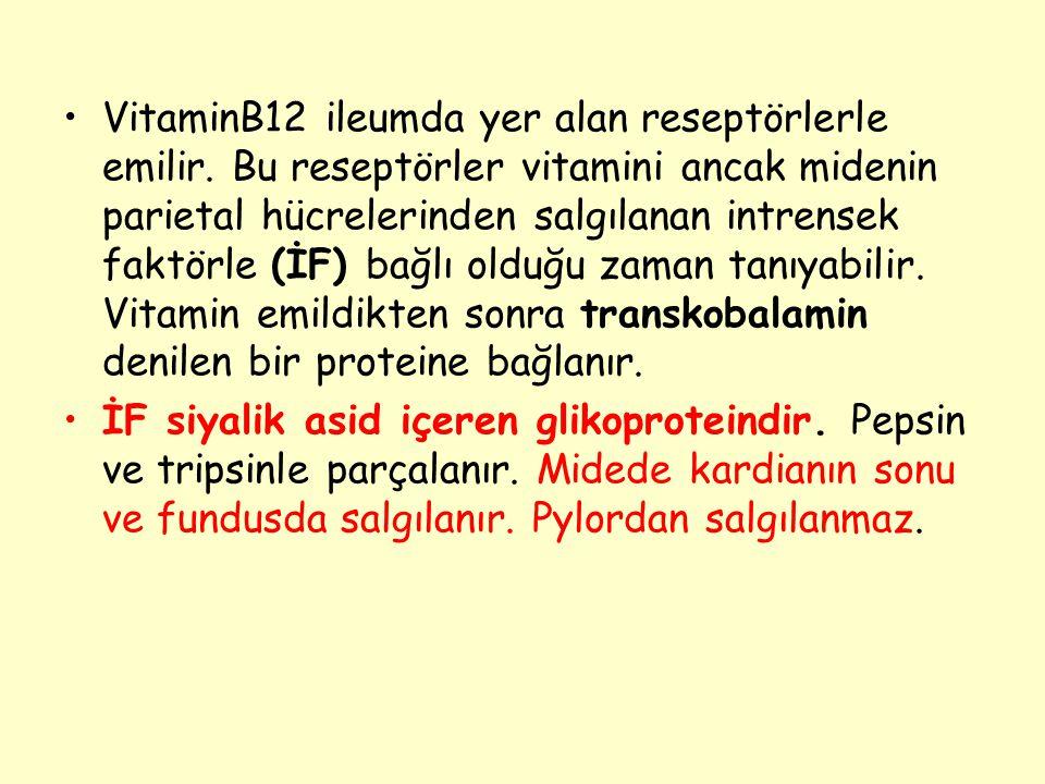VitaminB12 ileumda yer alan reseptörlerle emilir. Bu reseptörler vitamini ancak midenin parietal hücrelerinden salgılanan intrensek faktörle (İF) bağl