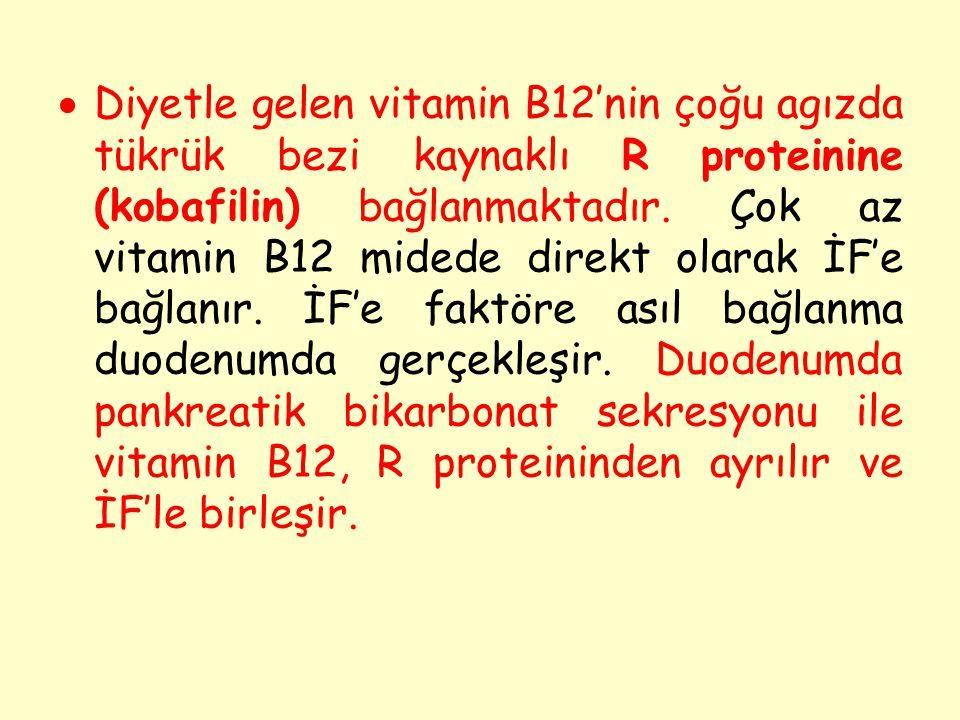  Diyetle gelen vitamin B12'nin çoğu agızda tükrük bezi kaynaklı R proteinine (kobafilin) bağlanmaktadır. Çok az vitamin B12 midede direkt olarak İF'e
