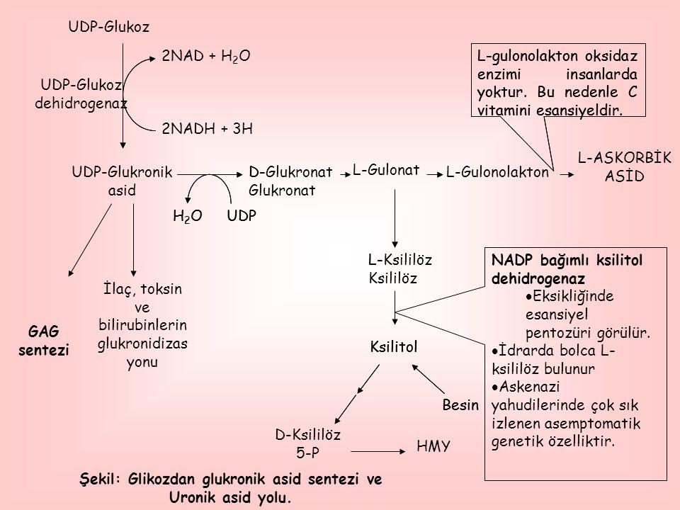 HMY L-ASKORBİK ASİD UDP-Glukoz dehidrogenaz 2NAD + H 2 O 2NADH + 3H İlaç, toksin ve bilirubinlerin glukronidizas yonu H2OH2OUDP D- Glukronat L-Gulonol