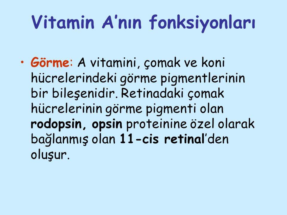 Vitamin A'nın fonksiyonları Görme: A vitamini, çomak ve koni hücrelerindeki görme pigmentlerinin bir bileşenidir. Retinadaki çomak hücrelerinin görme