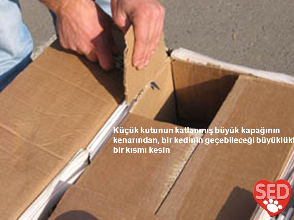 Küçük kutunun katlanmış büyük kapağının kenarından, bir kedinin geçebileceği büyüklükte bir kısmı kesin