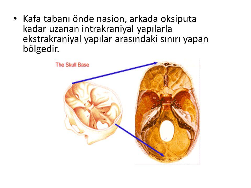 KAFATASININ İÇ ANATOMİSİ Anteriorda :frontal sinüs arka duvarı Posteriorda: protuberansia oksipitalis interna, oksipital ve parietal kemik