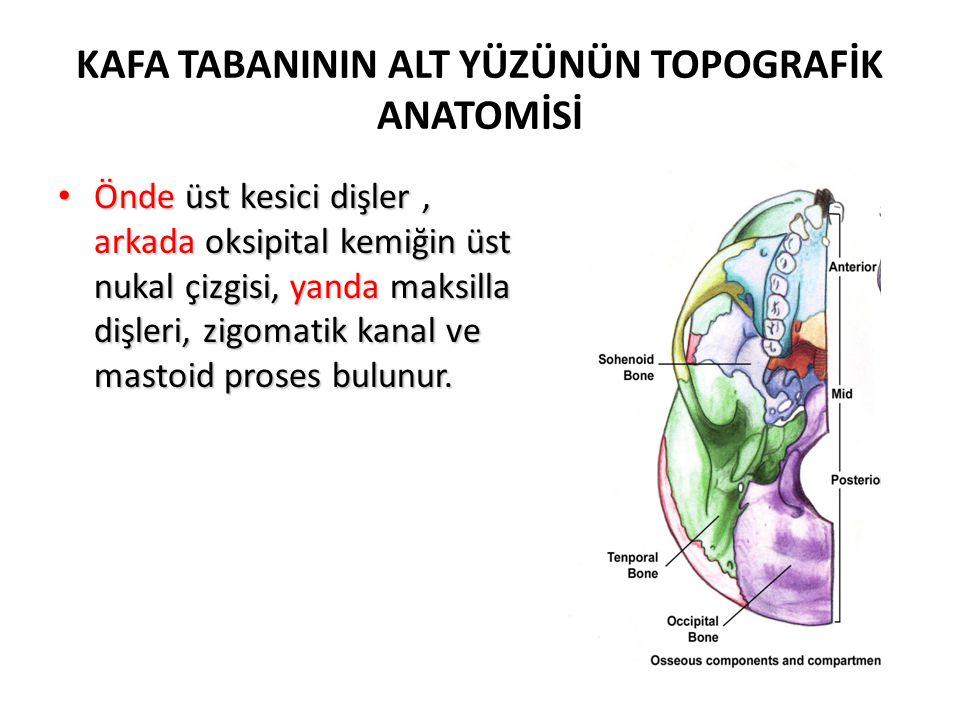KAFA TABANININ ALT YÜZÜNÜN TOPOGRAFİK ANATOMİSİ Pterigoid plateler: sfenoid büyük kanadının köküne bağlanır.