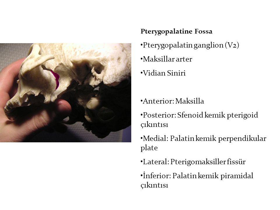 Pterygopalatine Fossa Pterygopalatin ganglion (V2) Maksillar arter Vidian Siniri Anterior: Maksilla Posterior: Sfenoid kemik pterigoid çıkıntısı Medial: Palatin kemik perpendikular plate Lateral: Pterigomaksiller fissür İnferior: Palatin kemik piramidal çıkıntısı