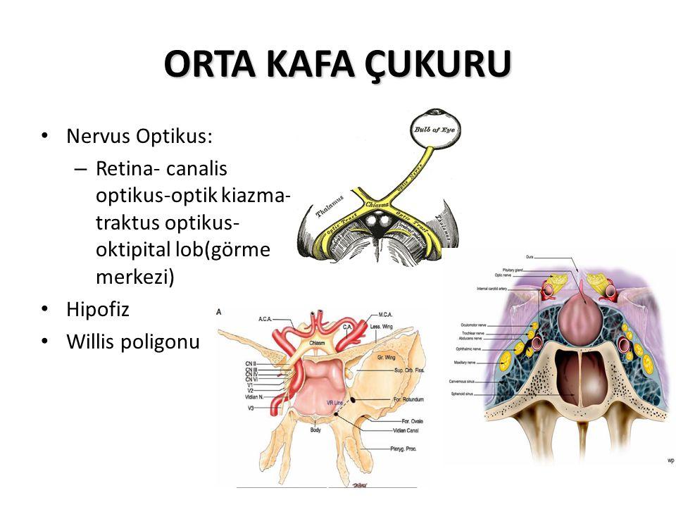 ORTA KAFA ÇUKURU Nervus Optikus: – Retina- canalis optikus-optik kiazma- traktus optikus- oktipital lob(görme merkezi) Hipofiz Willis poligonu
