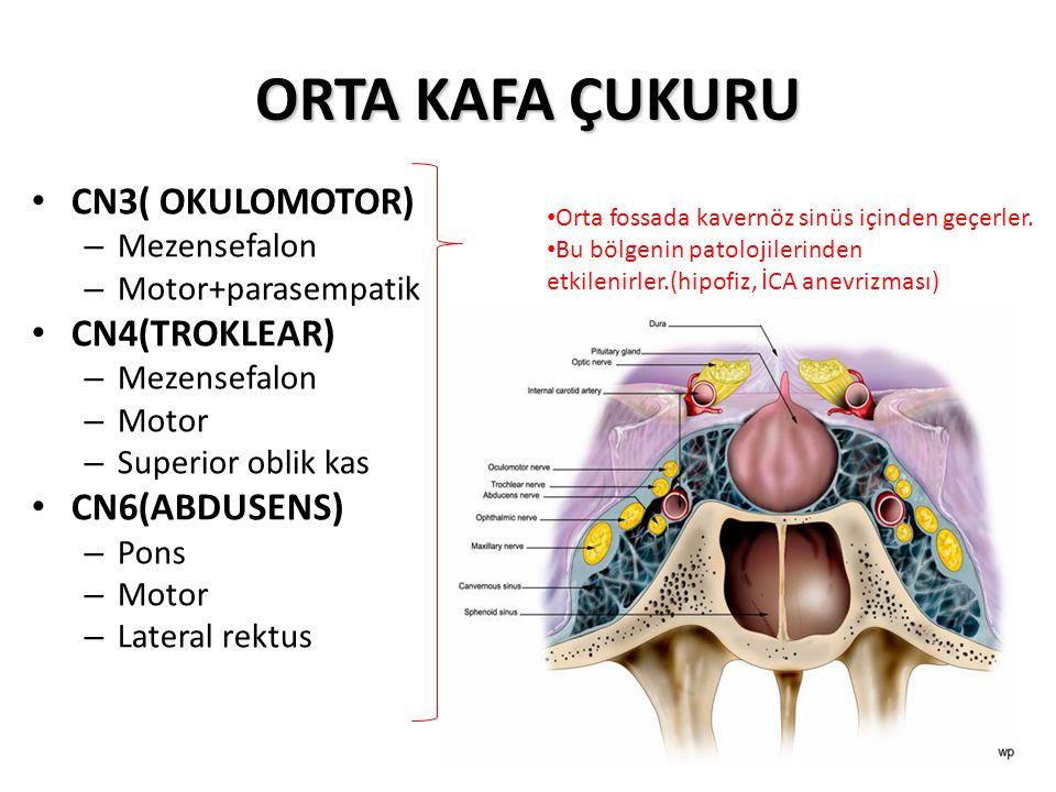 ORTA KAFA ÇUKURU CN3( OKULOMOTOR) – Mezensefalon – Motor+parasempatik CN4(TROKLEAR) – Mezensefalon – Motor – Superior oblik kas CN6(ABDUSENS) – Pons – Motor – Lateral rektus Orta fossada kavernöz sinüs içinden geçerler.