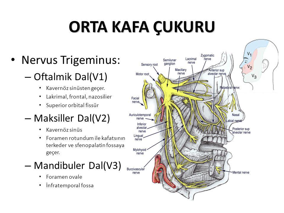 ORTA KAFA ÇUKURU Nervus Trigeminus: – Oftalmik Dal(V1) Kavernöz sinüsten geçer.