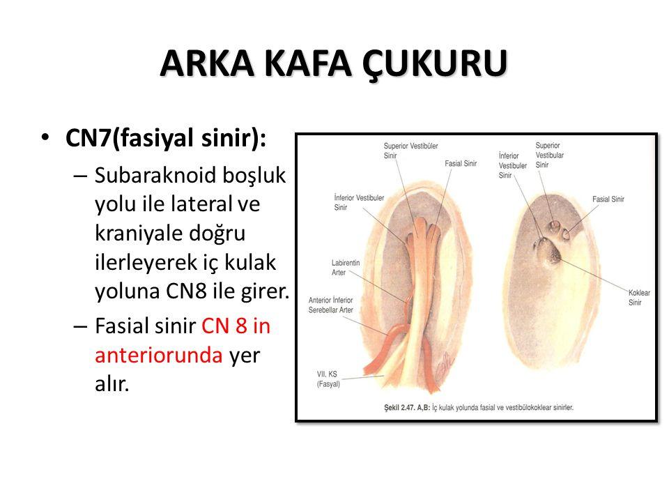 ARKA KAFA ÇUKURU CN7(fasiyal sinir): – Subaraknoid boşluk yolu ile lateral ve kraniyale doğru ilerleyerek iç kulak yoluna CN8 ile girer.