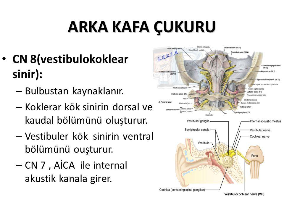 ARKA KAFA ÇUKURU CN 8(vestibulokoklear sinir): – Bulbustan kaynaklanır.