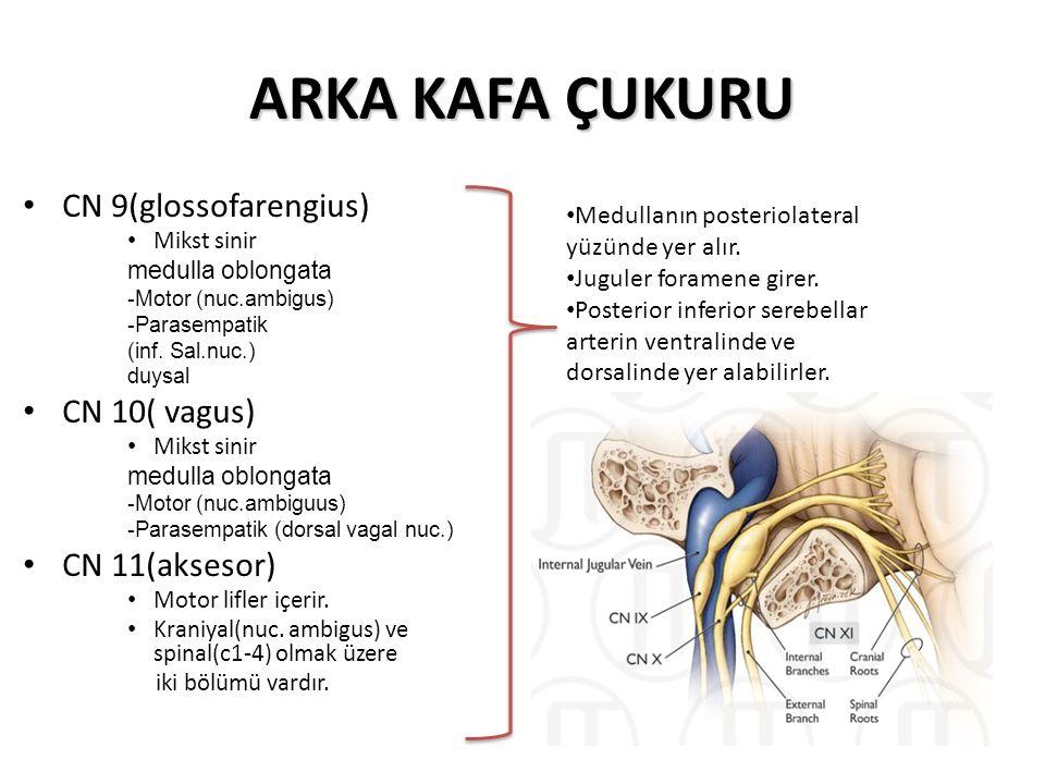 ARKA KAFA ÇUKURU CN 9(glossofarengius) Mikst sinir medulla oblongata -Motor (nuc.ambigus) -Parasempatik (inf.